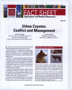 Icon of Urban Coyotes- Conflict And Management