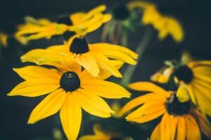 Volunteer Event ~ Perennial Thinning @ Kenwood Gardens   Cincinnati   Ohio   United States